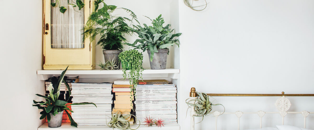 Bring Positivity in Your Home – Bring Indoor Plants